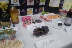 Degustaciones Quimica Organica-Instituto Zoila (9)